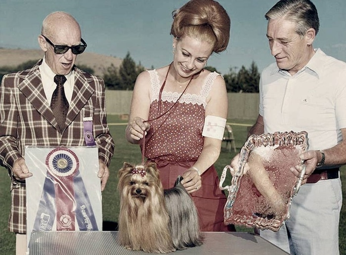 American Kennel Club cau lac bo cho keng 2 5