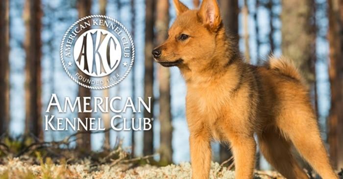 American Kennel Club cau lac bo cho keng