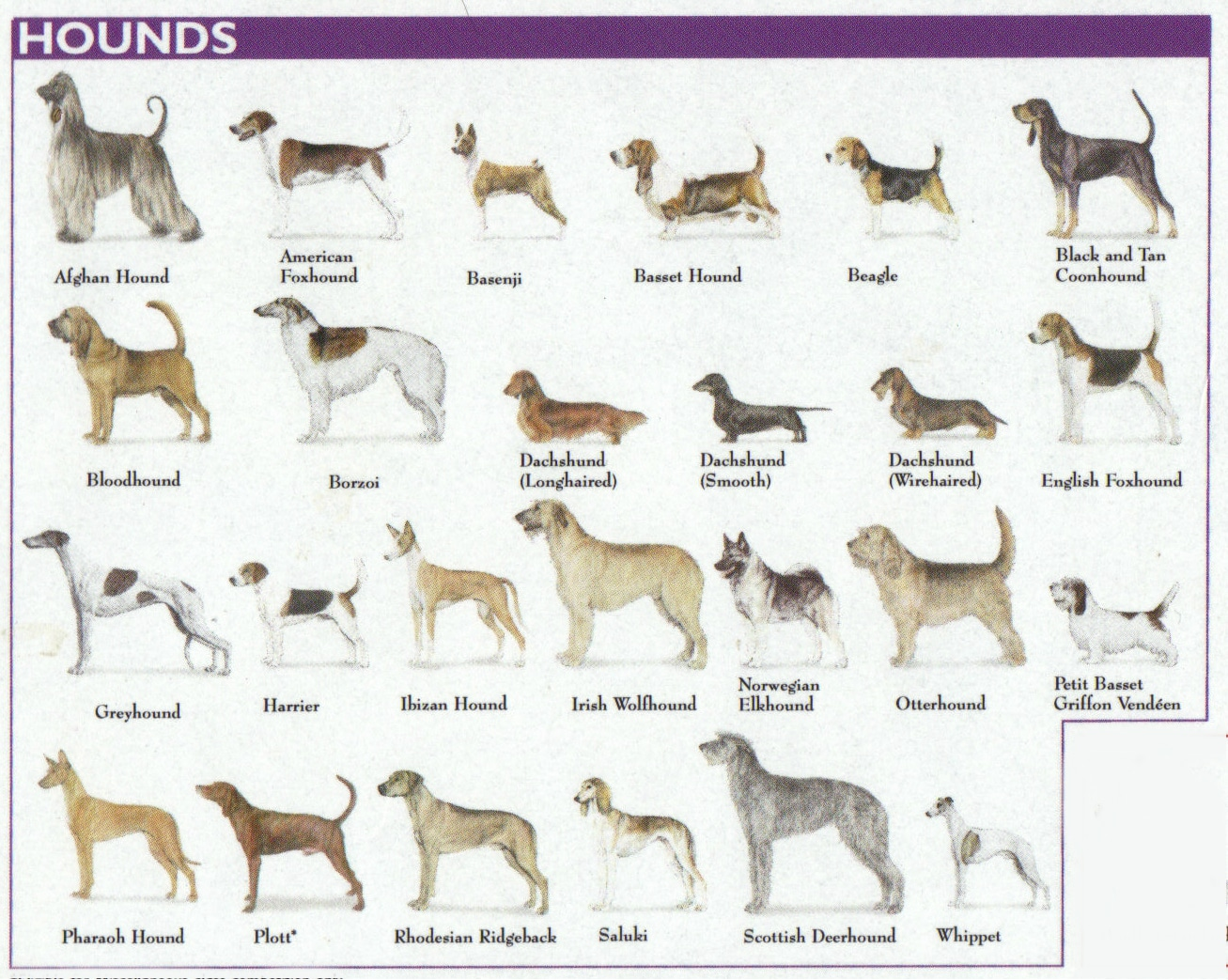 hounds dog breed chart 3
