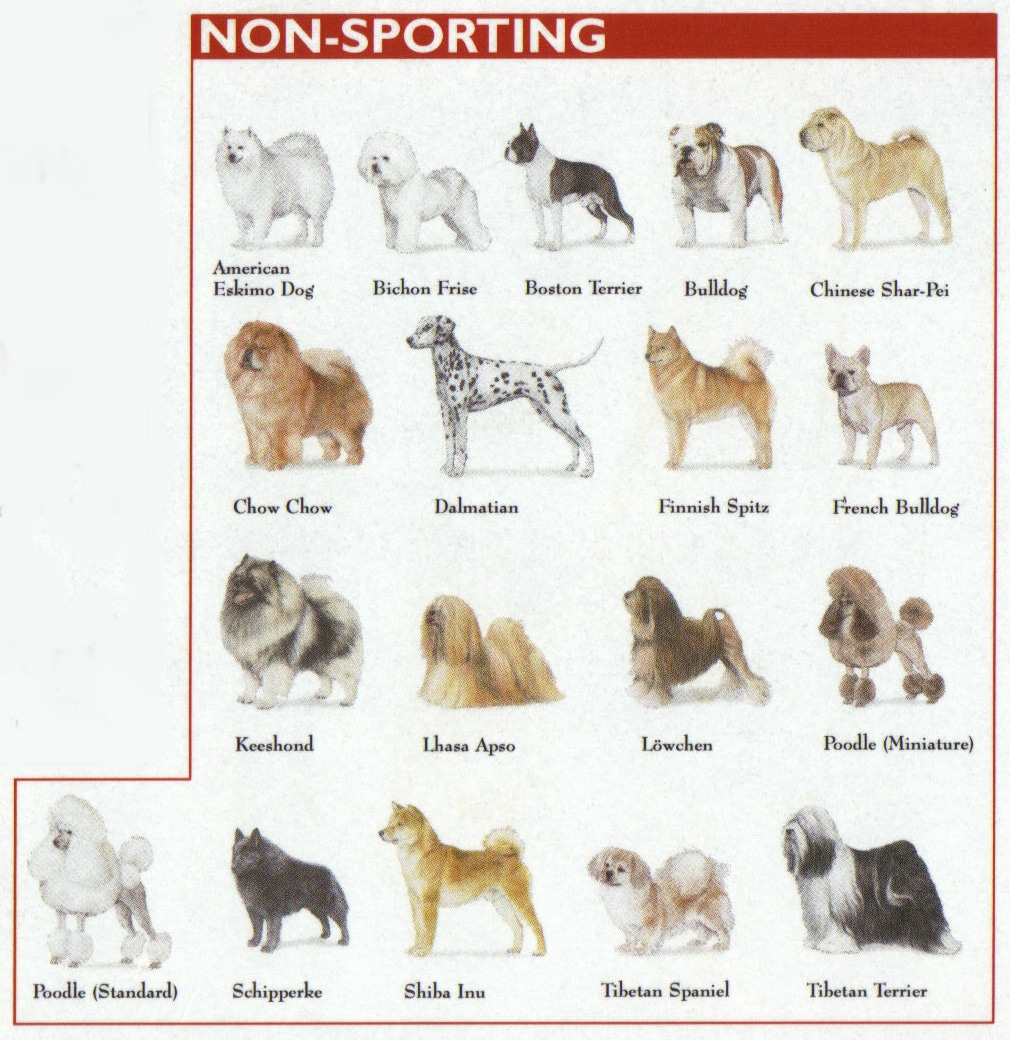 non sporting breeds chart 6