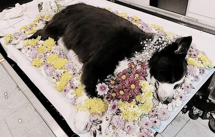 dich vu hoa tan cho meo