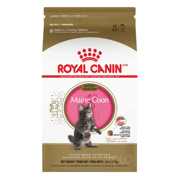 hinh san pham royal canin maine coon kitten