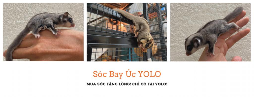mua soc bay uc tang long mini