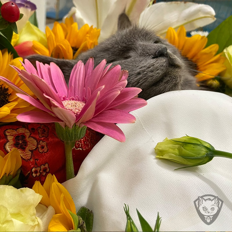 gui hinh anh hoa tang cho meo thu cung cho chu