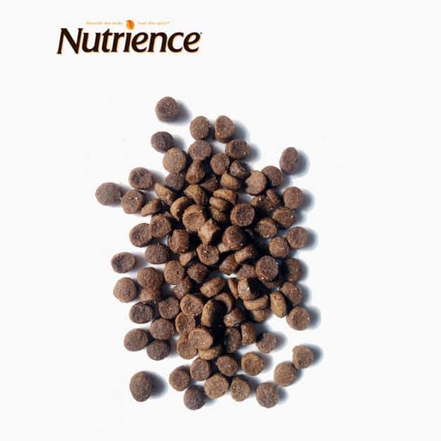 hinh thuc te nutrience cho meo trong nha