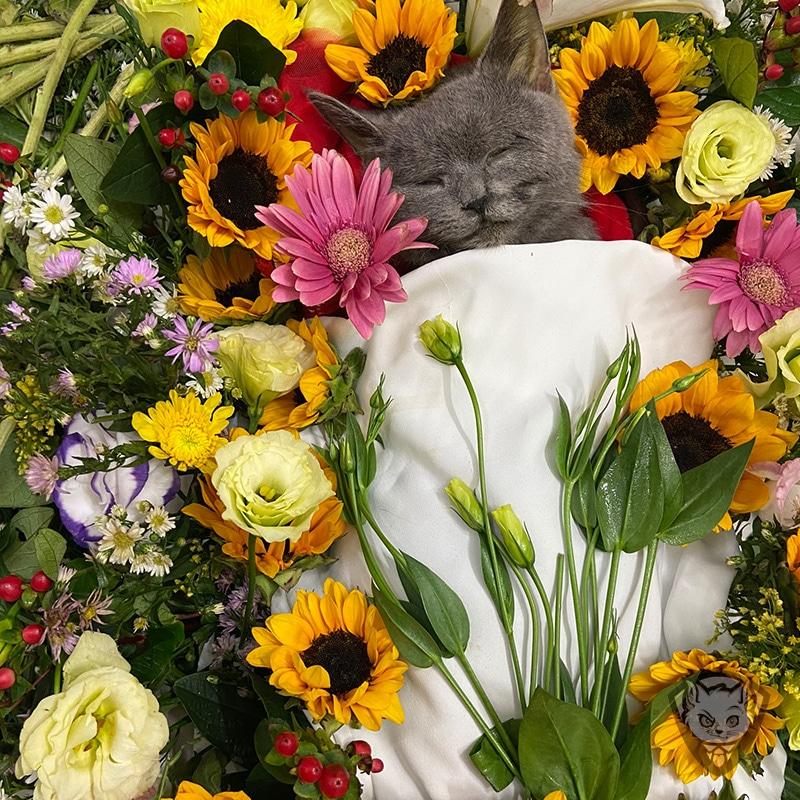 yolo pet cremation dich vu hoa tang chuyen nghiep