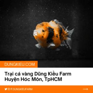 trai ca vang dung kieu farm tai huyen hoc mon tphcm