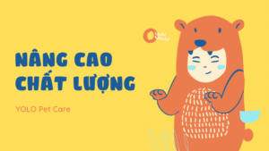 nang cao chat luong yolo pet cremation